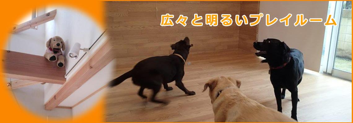 犬のお預かり・広々プレイルーム
