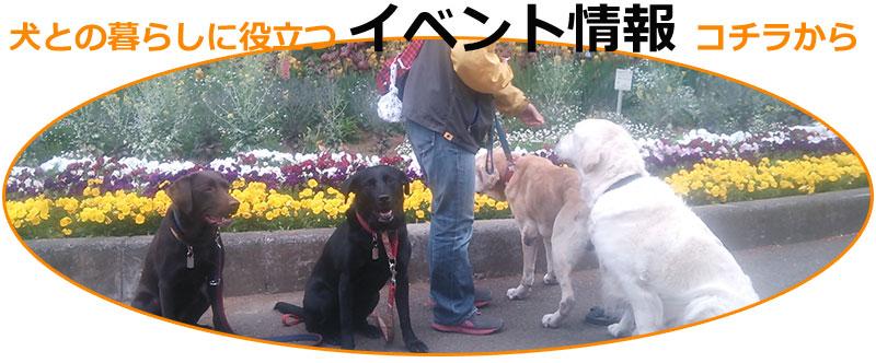 犬のしつけ・イベント