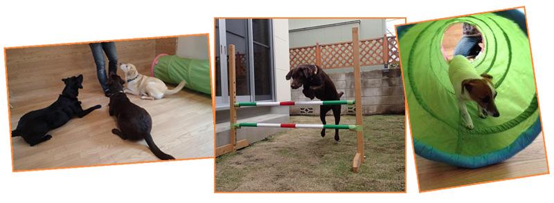 プレイルーム・お庭で楽しくドッグトレーニング
